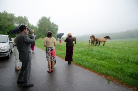 koně | Slavkov