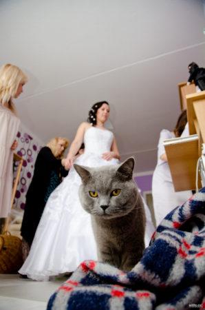 kocour, svatební přípravy nevěsty | Český Krumlov