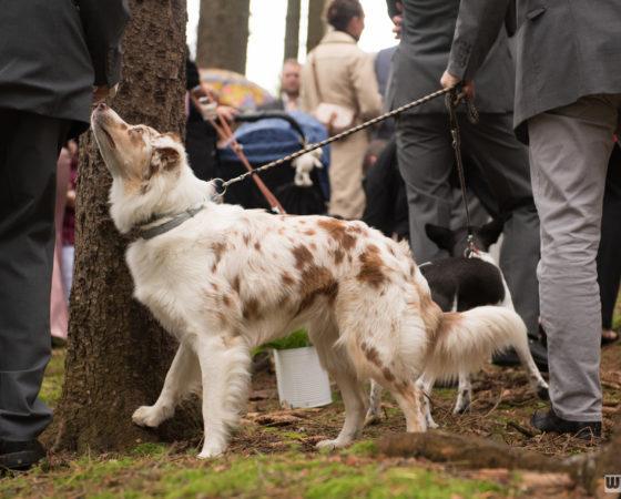 psi na svatbě | Horní Planá